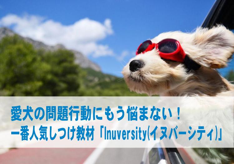 一番人気の犬のしつけ教材「イヌバーシティ」愛犬の問題行動にもう悩まない!