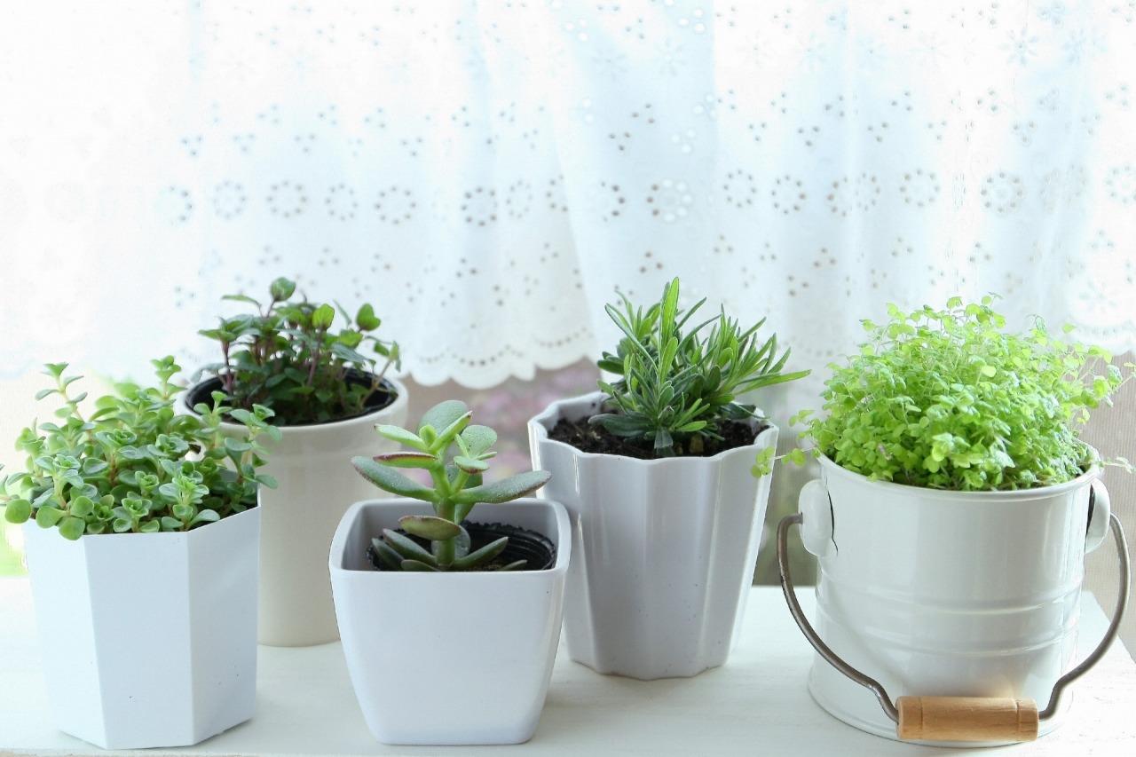 室内観葉植物