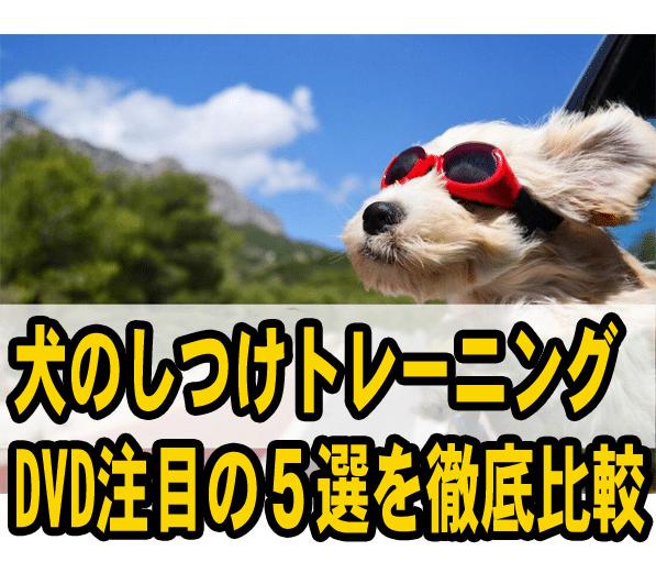 犬のしつけトレーニングDVD