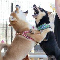 犬の問題行動