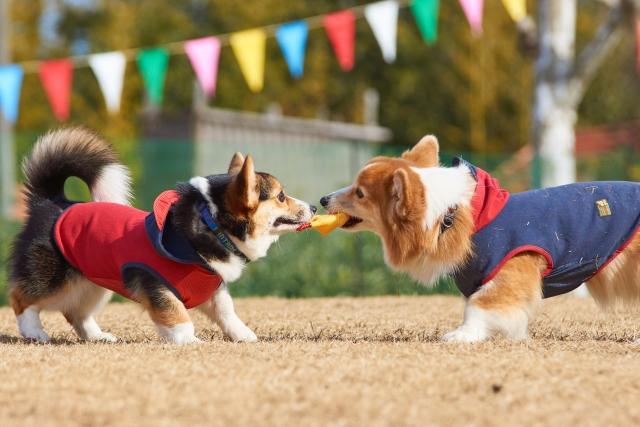 あきらめていた愛犬の問題行動の解消に西川文二氏【犬のしつけ革命】