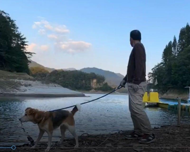 犬の散歩湖畔