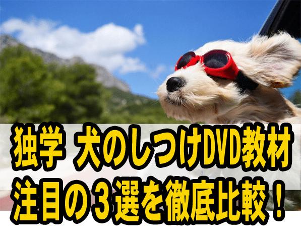独学 犬のしつけDVD教材